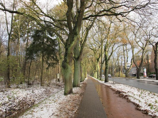 Bürgerpark: arboles del parque