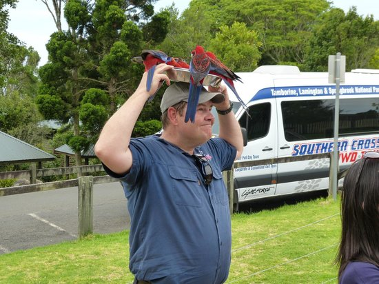 Southern Cross 4WD Tours: Parrots Feeding