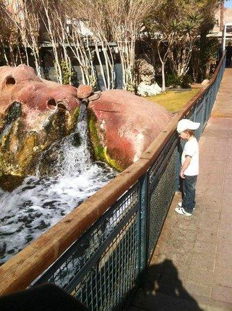 Underwater Observatory Marine Park: Небольшой водопад