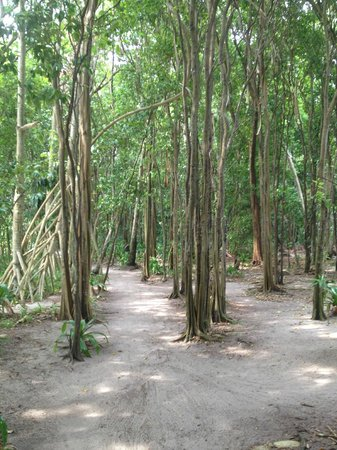 Pulau Pangkil: Forest walk to the pool