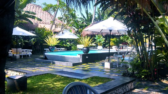 Voyager Boutique Creative Retreat: Awesome infinity pool and beautiful grounds!