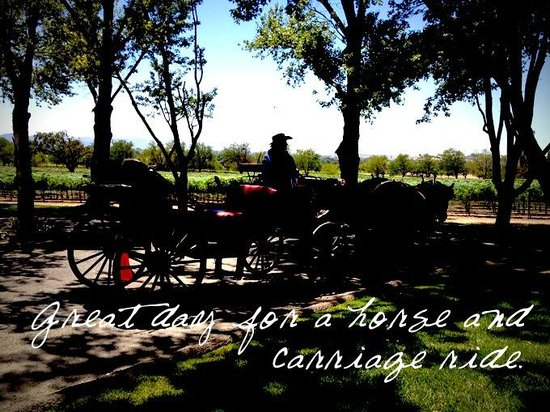 Solvang Taxi and Wine Tours: Horse and Carriage ride at Bridlewood