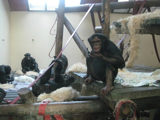 Monkey World: Hananya's group inside