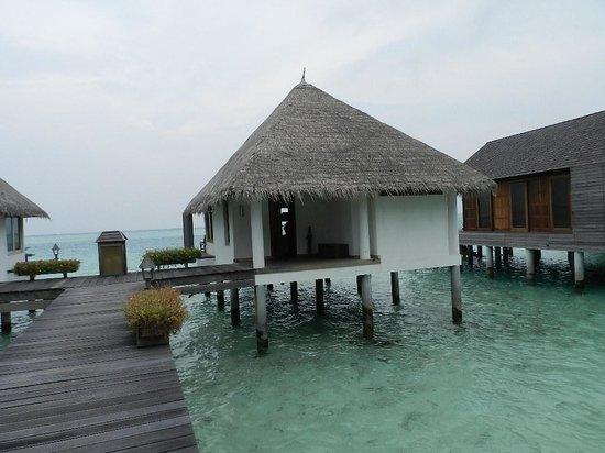 Gangehi Island Resort: fishes all round the villa