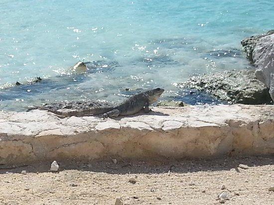 Heaven en Hard Rock Hotel Riviera Maya: iguana