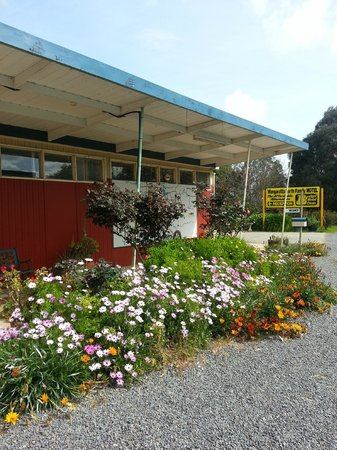 Wangaratta North Family Motel: The lodge with beautiful flowers.