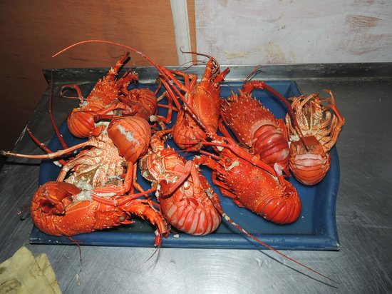 Friendly Beach: Delicious lobsters which were prepared for our dinner