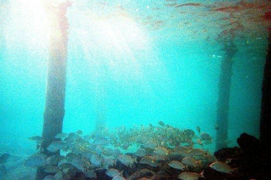 Pelican Reef Villas Resort: End of Hotel Pier