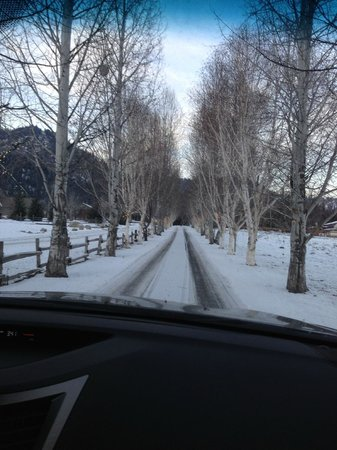 Abendblume: Birch tree lined drive