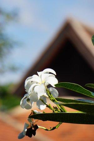 Lanna Boutique Village: Flower in the garden