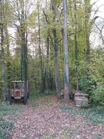 Clos de mondetour : fabulous village and wood land walks!