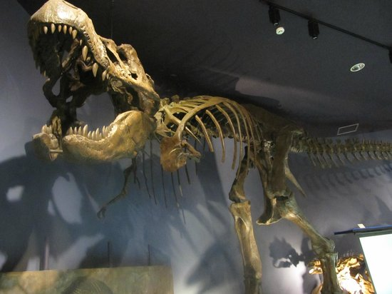 Miyazaki Prefectural Museum of Nature and History: Big T-Rex skeleton