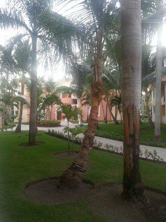 Grand Bahia Principe Bavaro : Vista desde la Habitacion