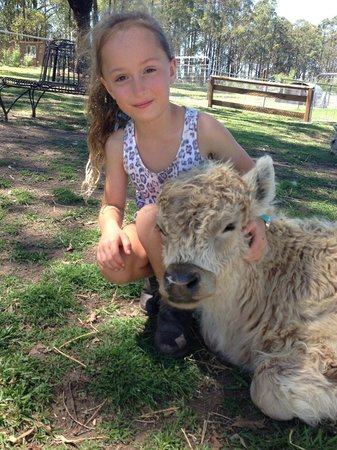 Honeycomb Valley Farmstay: Meeting the animals