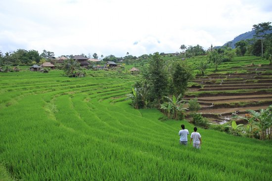 Abian Ayu Villa: view from balcony