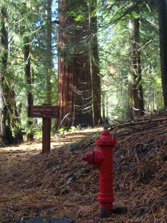Mariposa Grove of Giant Sequoias: Инфраструктура Mariposa Grove