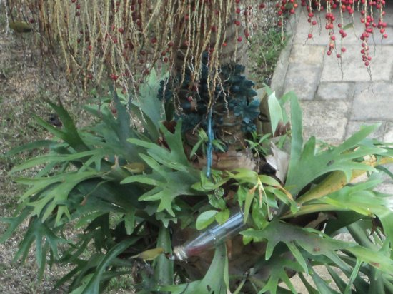 Acorn B&B in Durban: Birds having a drink in the Acorn's tree
