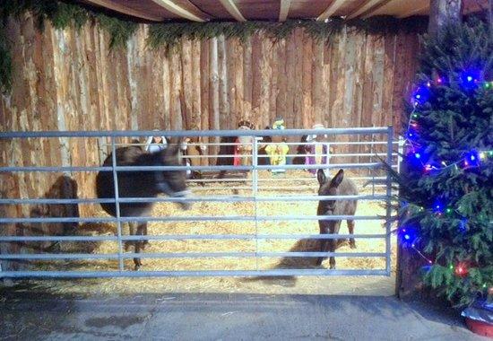 Rand Farm Park: Living Farm Nativity
