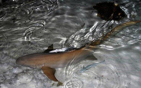 Pension Vekeveke Village : Requin dormeur