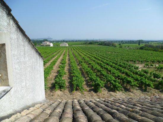 Mas de la Treille: View of surrounding area