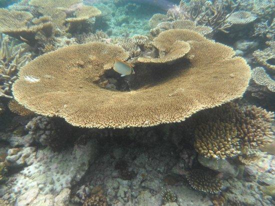 Embudu Village: couploe de corail