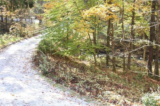 Fox Creek Inn: Driveway