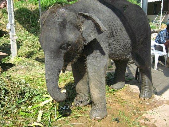 Chalong, Thailandia: Baby Nellie