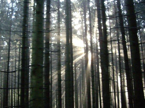 Harzer Schmalspurbahnen: Eerie light patterns amongst the trees