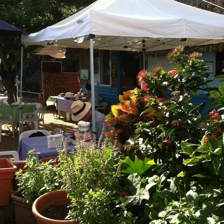 CAFE BAHIA: The herb & veggie garden in the courtyard