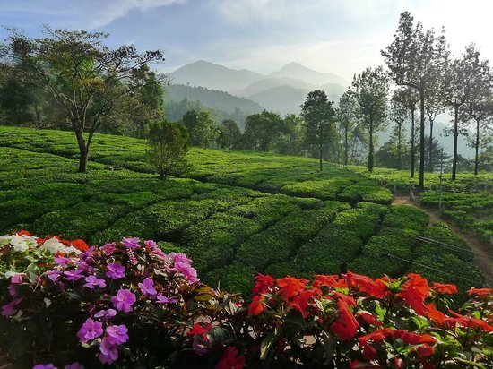 Gruenberg Tea Plantation Haus : The view from the roof terrace in the morning