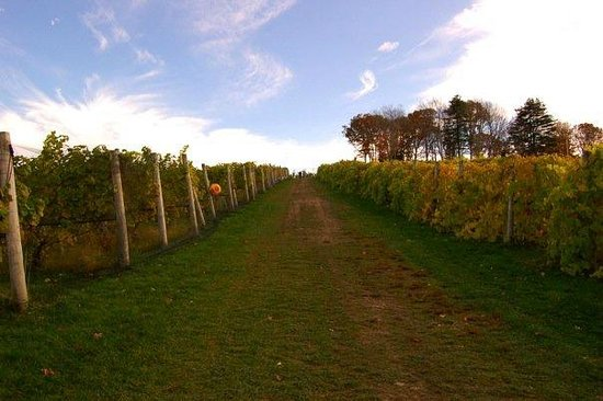 "Sharpe Hill Vineyard: Vineyard ""up the hill"""