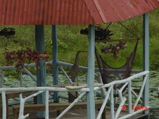 Estacion Biologica El Zota: Balcon en medio de nuestra laguna