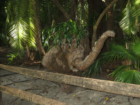 Palm Beach Zoo & Conservation Society : cool plants & displays