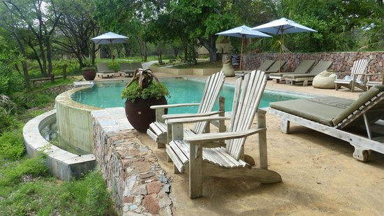 Thornybush Game Lodge: piscine