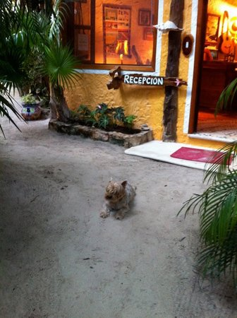 Holbox Hotel Mawimbi: Reception Area