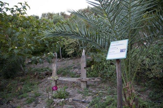 BOTANICAL PARK & GARDENS OF CRETE - Picture of Botanical ...