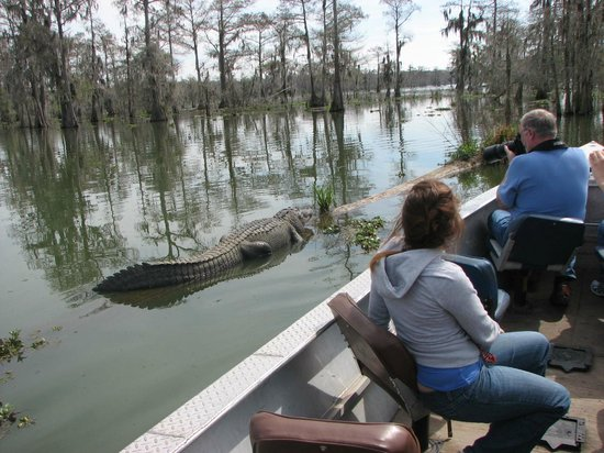 Cajun Country Swamp Tours