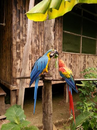 Otorongo Amazon River Lodge: Lodge Residents