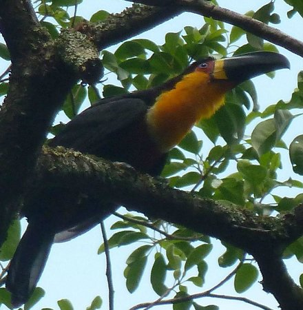 Martha Vasconcellos - Private Tours in Rio: Toucan at the Botanical Gardens