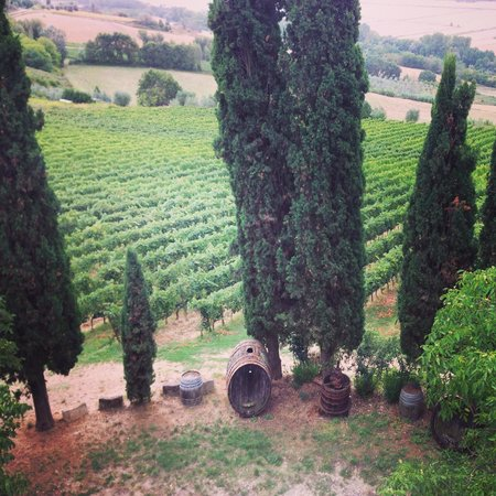 Organic Tuscany Cooking Classes: Tuscan Vineyard