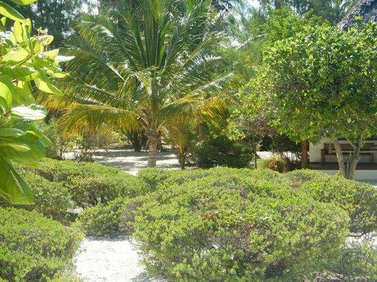 Hakuna Majiwe Beach Lodge: c
