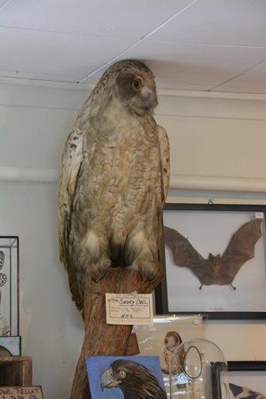 "The Rock & Art Shop: A hawk, I believe, also in the ""museum"""