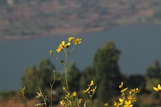 Exotic Home Stay - Panchgani: Lot of subjects for photography