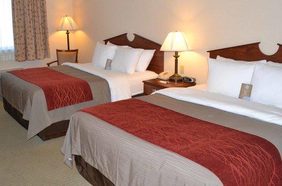 SureStay Plus Hotel by Best Western Buffalo : New Bedding