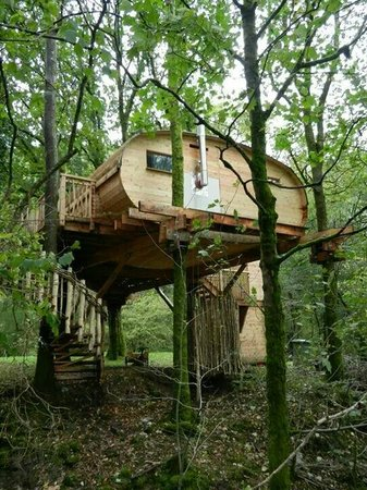 The toilet window picture of living room treehouses for 8 living room tree houses powys