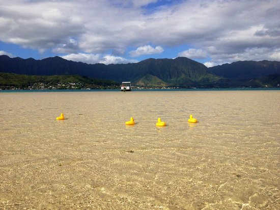 Kane'ohe Bay: More duck races