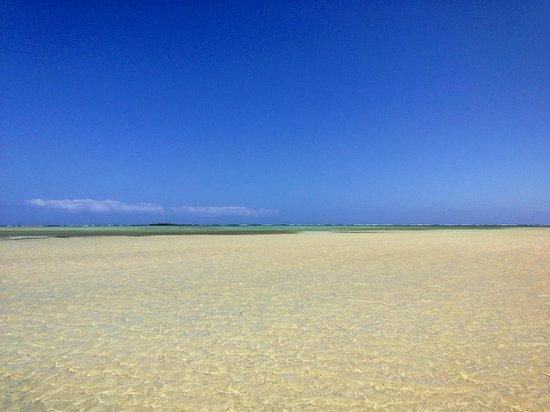 Kane'ohe Bay: Beuatiful sand bar