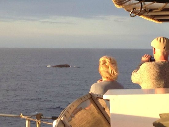 Pacific Whale Foundation: Up close and personal