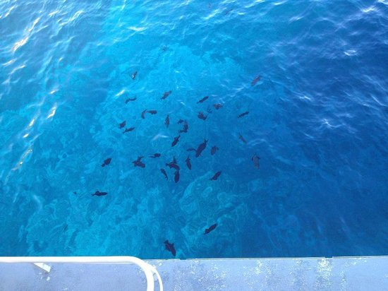 Pacific Whale Foundation: Lots to see when snorkeling