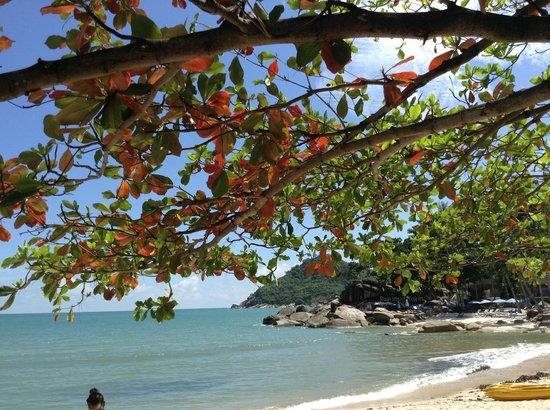 Buri Rasa Koh Phangan: Schatten spendender Baum am Strand